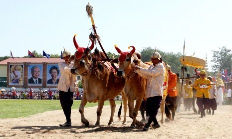 Royal Ploughing Ceremony | Cambodia