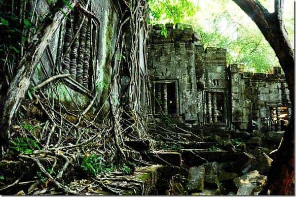 Beng Mealea vegetation
