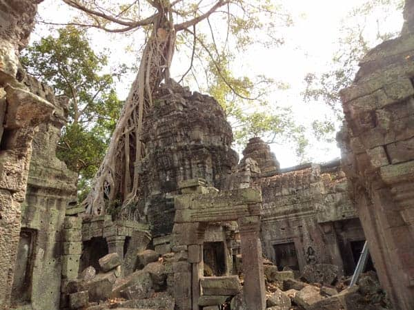 Ta Prohm Temple Angkor Park - Stay at one of the many luxury hotels in Siem Reap Nearby