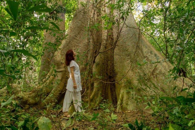 Hosting Yoga Retreats in Siem Reap, Cambodia - Forest Meditation