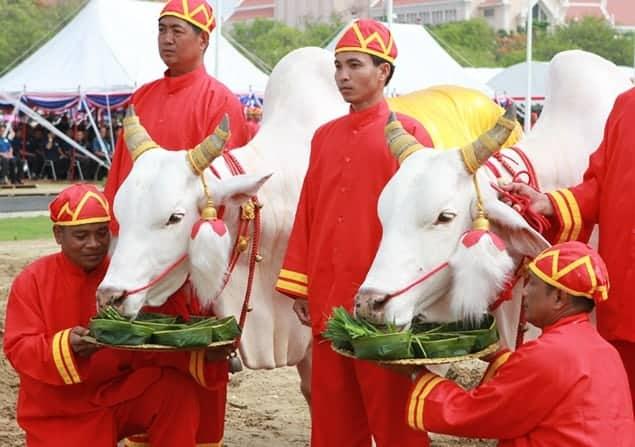 Cambodia Holidays: Royal Ploughing Day