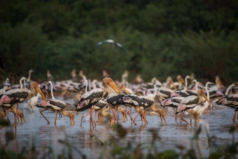 Bird Sanctuary in Siem Reap, Cambodia